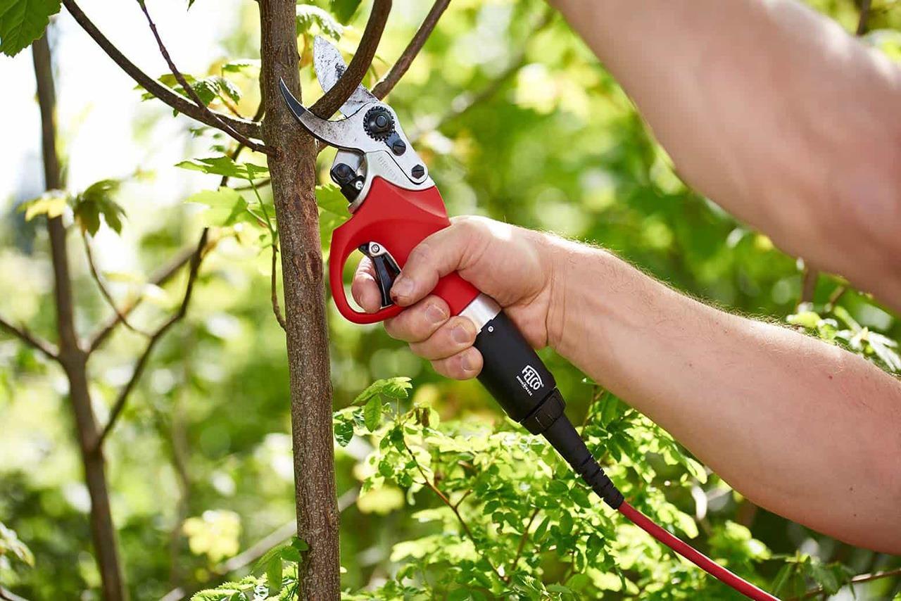 Sécateur FELCO  ultra rapide puissant et précis. Ideal pour la taille et l'entretien de vos vignes et fruitiers.